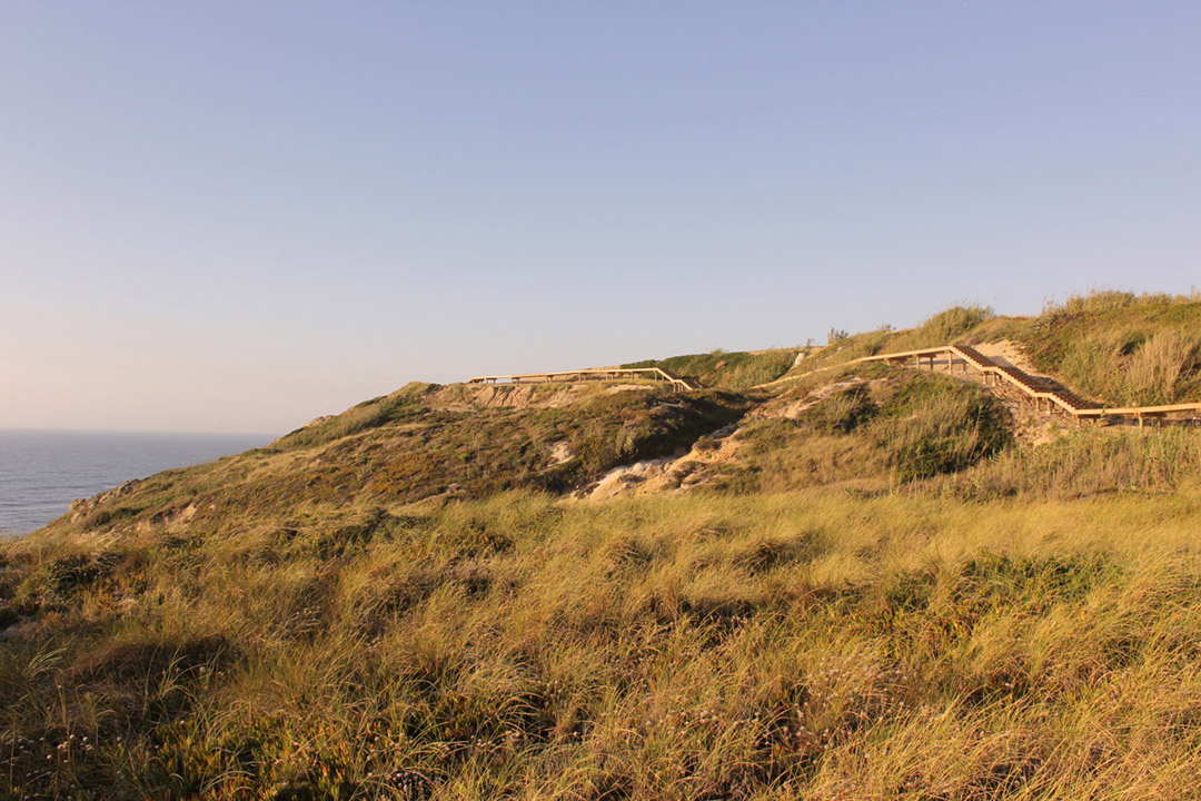 葡萄牙海滨沙丘及峭壁生态修复改造项目 (7)
